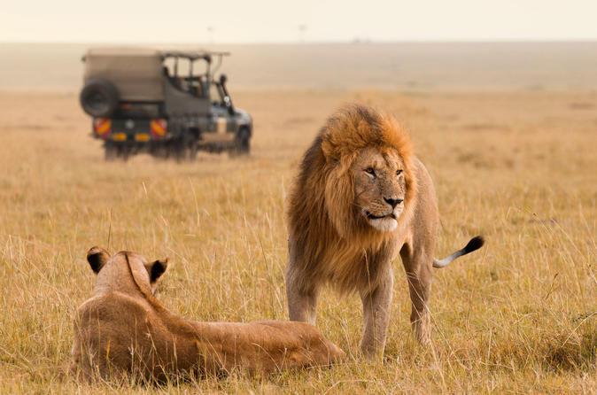 lions Johannesburg safari